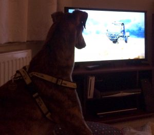 After work is done, companion Ginny will be happy to sit and watch some TV together...