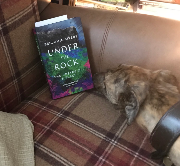 Ginny the lurcher keen to read...